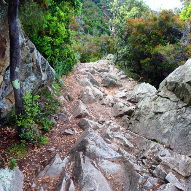 The trail is pretty rocky at times