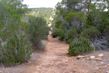 The trail goes uphill for a while